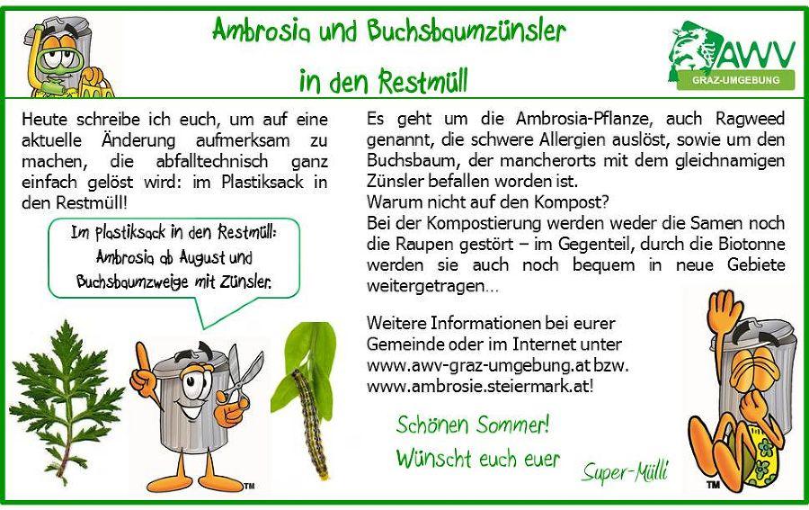 buchsbaum entsorgen free rohr erfolgreich bekmpfen tipps. Black Bedroom Furniture Sets. Home Design Ideas